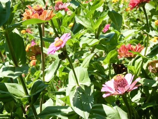 Jardins en fleurs
