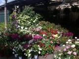 Les marchés aux fleurs de Paris àLondres