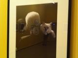 Le chat à travers l'oeil de l'objectif
