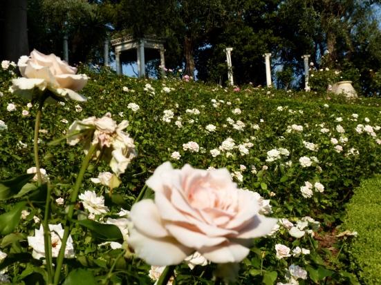 La roseraie, Villa Ephrussi de Rothschild