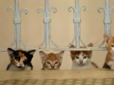 Des hommes et des chats àIstanbul